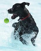 Soggy Doggy Swim Party