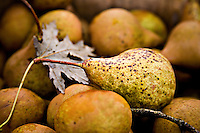 Stock photo of Bartlett pears, spotted yellow and brown with autumn colors. A dried maple leaf has dreifted onto the pears, reinforcing the autumnal mood.