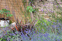 Cottage garden style plantings with Phormium, herb English lavender Lavandula angustifolia, culinary sage Salvia officinalis 'Purpurascens', ornamental onions Allium, verbena bonariensis, melianthus stone wall, old rusting rustic bread pail ornament, fence, lush and rambling flowers and foliage plants together