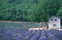 Lavender and farmhouse, Provence, France ..© Owen Franken.