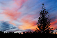 &quot;NIGHT FALL&quot;<br /> <br /> Spectacular Montana sunset with Douglas Fir in silhouette. Image taken at Dancing Deer Ranch