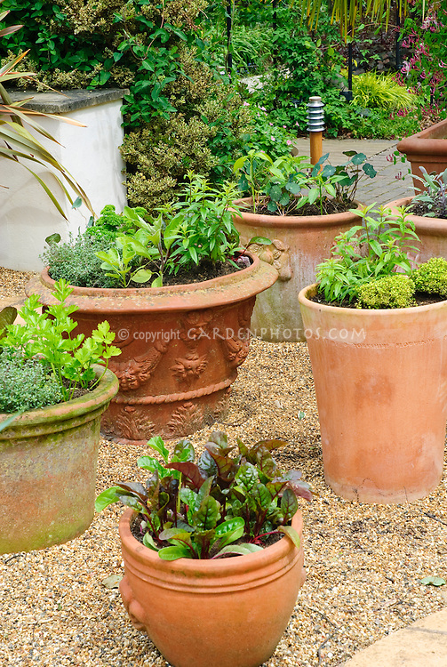 Herb Container Gardening Plant Flower Stock