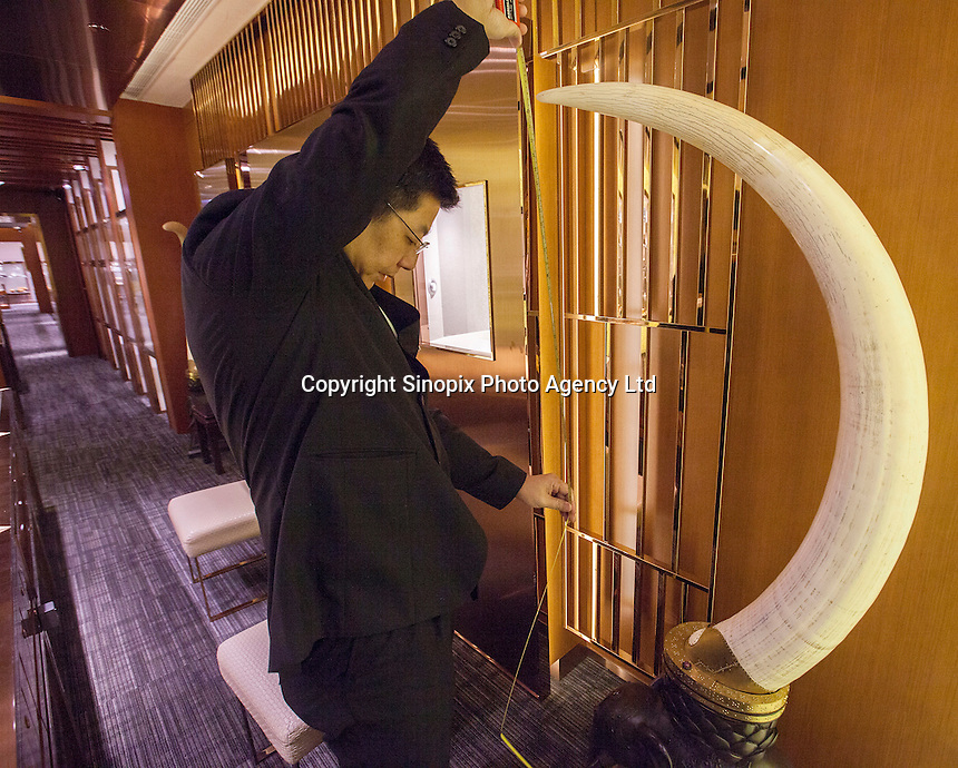 A salesman measures one tusk from a pair of ivory tusks worth HK$8.2 million (GBP648,000.00) on sale in 'Chinese Arts &amp; Crafts', Hong Kong, China, 29 November 2013. <br /> <br /> Photo by Alex Hofford / Sinopix