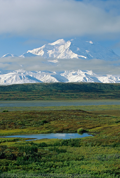 North And South Peaks Of Denali, North America's Highest Mountain. Summer Green Tundra Of Thorofare Flats, Denali National Park, Alaska