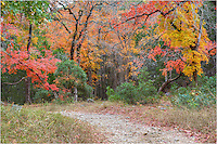 Whose woods are these I think I know? They are the colors of Lost Maples State Park in November. As well as memorable walks through colorful forests of maples and oaks, the fishing can be pretty good along the Sabinal River. Located in the Texas Hill Country near Vanderpool, this location may take a few hours to reach by car, but the trek is worth the effort.