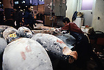 Tuna is sawed into manageable pieces at Tsukiji Fish Market in Tokyo, Japan where a skilled army of licensed middlemen and buyers purchase tuna and a variety of seafood for sale in the market's 1,400 shops.  Because of the Japanese passion for freshness, all the fish sold will be consumed by Tokyo residents the following day.(Jim Bryant Photo).....