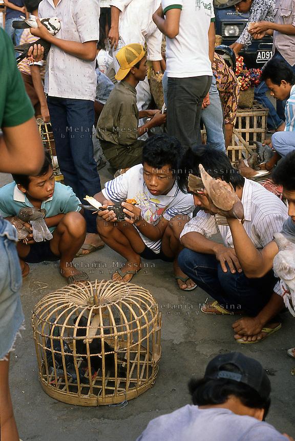 Indonesia, Java island, Yogyakarta: the bird market in Kota Gede'.<br /> Indonesia; Giava; Yogyakarta: il mercato degli uccelli di Kota Gede'.