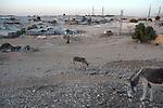 ISRAEL Wadi el-Na'am, Negev desert<br /> Donkeys.
