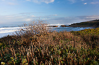 Despite winter rains, some plants along the bluffs at Pescadero State Beach still sleep through the winter.