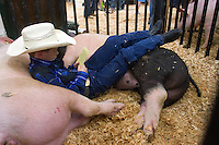 Laying on his pigs &quot;Thunder&quot; (left) and &quot;Lightning&quot; Blake Neuman, 10, from Enumclaw, Wash., reads a note that a sponsor was donating money towards his project. Neuman is a 4H student from Westwood Elementary School. This is his second year raising pigs in the 4H program. His parents are farmers raising cows, chickens and goats and have a barn for this pigs. When he gets older he wants to be rancher. He wants to use the money he makes from selling Thunder and Lightning for his first rifle and for college. Lightning weighs 254 pounds. Neuman weighs 73.<br /> <br /> Students in the FFA and 4H programs participate in the auction of livestock including steers, lambs and hogs in the Northwest Junior Livestock Show at the Washington State Spring Fair in Puyallup, Wash. on April 19, 2015.  (photo &copy; Karen Ducey Photography)