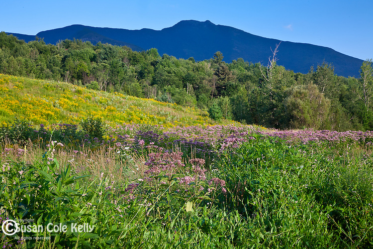Mount Mansfield in Underhill State Park, Underhill, VT, USA