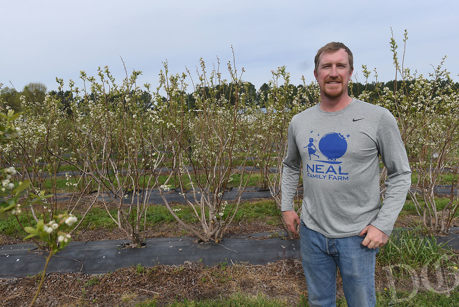 NWA Democrat-Gazette/FLIP PUTTHOFF <br />Ryan Neal poses Tuesday April 11 2015 in the blueberry patch at Neal Family Farms in Rogers.
