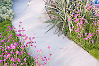 Armeria planted near house garden pathway walk