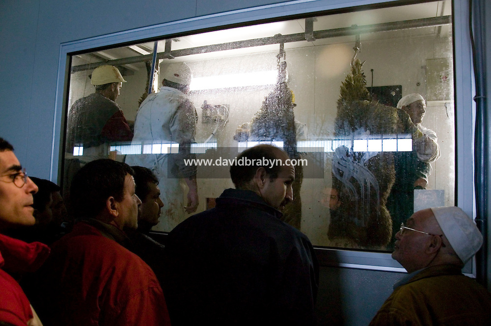 People observe butchers at work during the ritual sheep slaughter held for the Muslim celebration of Aid-el-Kebir at a temporary slaughterhouse set up in an hanger in Pantin, outside Paris, France, 1 February 2004. Photo Credit: David Brabyn.