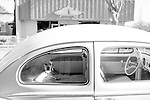 A dog sits in the backseat of a Volkswagon near the Safeway store in downtown Los Altos.