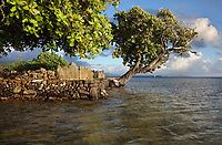 Ahu or altar of the Marae Hauviri or Marae Taura'a-a-tapu, seen from the lagoon, family temple of the Tamatoa clan, at Taputapuatea, at Te Po, in the Opoa valley, on the island of Raiatea, in the Leeward Islands, Society Islands, French Polynesia. This marae holds the Te-Papa-tea-o-Ruea, or white investiture stone, brought by the god Hiro to found the chiefdoms or ari'i on Raiatea. Hauviri was the welcoming marae which received visitors as they disembarked from their canoes. This site was a meeting place and sacrificial site for travellers from all over the Pacific. Picture by Manuel Cohen