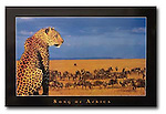 Poster by Portal<br />