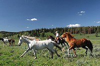 Cowboys, roundup of Horses, Flying A Ranch, Pinedale, Wyoming, USA