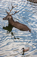 Espagne, Navarre, Pampelune, Parc de la Taconera, le zoo // Spain, Navarra, Pamplona,   Gardens of La Taconera, the zoo