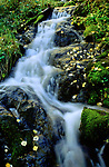 Water from Tesuque Creek tumbles over lichen covered rocks and autumn leaves in Santa Fe National Forest, New Mexico