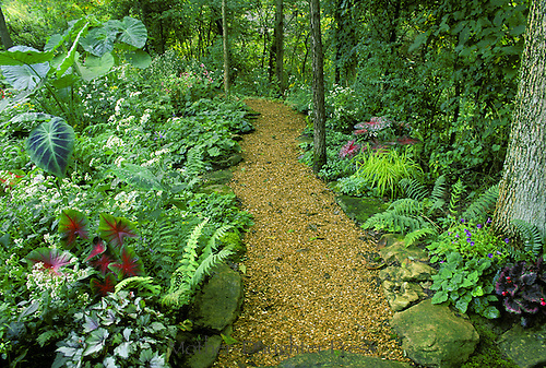 Path of pea gravel through shade garden at private home, Midwest