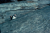 Tabby cat peers out from between two logs on a beach in Ketchikan Alaska.