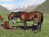 Im Sommerlager der letzten Nomaden in Kirgisistan im Tien-Shan-Gebirges an der Grenze zwischen Kasachstan und Kirgistan. / In the summer camp of the last nomads in Kyrgyzstan in the Tien Shan mountains on the border between Kazakhstan and Kyrgyzstan.