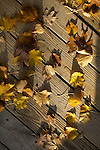 fall leaves yellow red orange on wood deck lit by sun fall colorful autumn