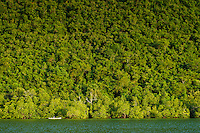 Mangroves and forest, Bubaa, nr Bangga, Gorontalo, Sulawesi, Indonesia.