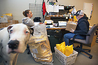 "USA. Arizona state. Scottsdale. Office of ""The Well Armed Woman. Where the Feminine and Firearms Meet"" which sell online resources for women gun owners. Ashley Suris (L) and her colleague are preparing online orders and get them ready to be shipped by United States Parcel Service. Ashley's dog wanders arounfd the office. The Great Dane is a large German breed of domestic dog  known for its enormous body and great height. A firearm is a portable gun, being a barreled weapon that launches one or more projectiles often driven by the action of an explosive force. Most modern firearms have rifled barrels to impart spin to the projectile for improved flight stability. The word firearms usually is used in a sense restricted to small arms (weapons that can be carried by a single person). The right to keep and bear arms is a fundamental right protected in the United States by the Second Amendment of the Bill of Rights in the Constitution of the United States of America and in the state constitutions of Arizona and 43 other states. 28.01.16 © 2016 Didier Ruef"
