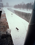 Black dog running on a snowy day in Ostrava, Czech Republic, Europe