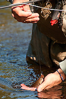 Landing a small brook trout on a wet fly on the Fox River in Michigans Upper Peninsula.