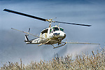 Williams Helicopter Corp. UH-1H flies low and sprays the almond blossoms with fungicide for brown rot in late winter in the Sacramento Valley