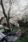 Under an umbrella of blossoms a couple rests at the Cherry Blossom Festival held in Oyo Park near Hirosaki Castle in Aomori Prefecture in Northern Honshu, Japan. Over 1500 cherry trees come into bloom from late April to Early May. (Jim Bryant Photo)....