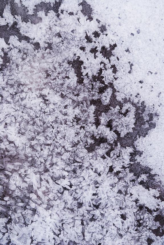 On frozen creek ice, bubbles create geometric crystalline patterns.