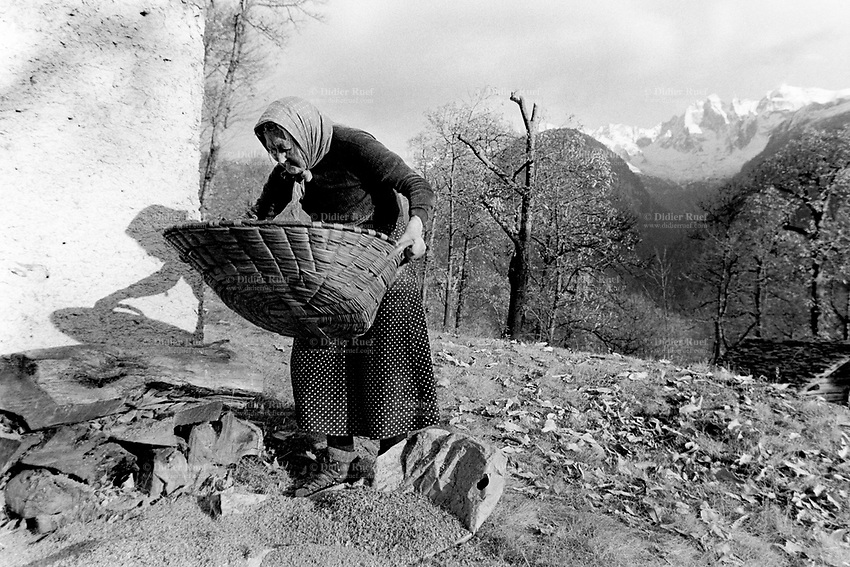 Switzerland. Canton Graubunden. Soglio. Bregaglia valley. An old woman shakes chesnuts in a wooden basket. Chestnut grove. View on the snowy mountian Piz Badile. Swiss alpine farmers. Alps mountains peasants.  © 1996 Didier Ruef