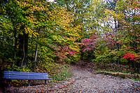 Entering Fall