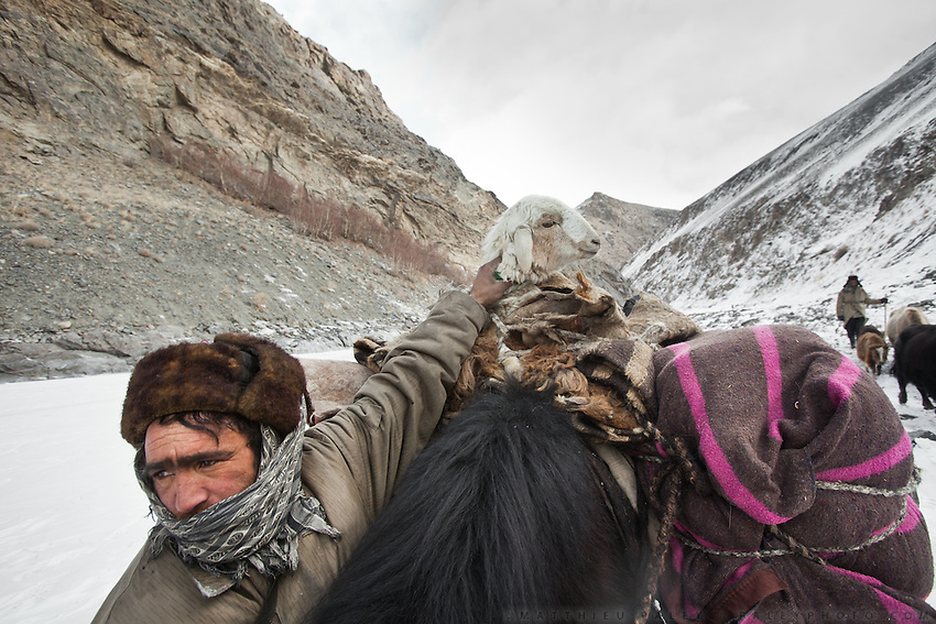 Caravan traffic. Passing a small caravan going down from the Pamir plateau : a man has attached a sick lamb on top of his yak, leading it down from the winter pasture of Chap Dara valley...A Wakhi caravan coming down from the winter pasture of Chap Dara valley...Trekking up the Wakhan frozen river, the only way up to reach the high altitude Little Pamir plateau, home of the Afghan Kyrgyz community.