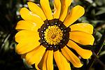 Random Flower in Folsom, CA