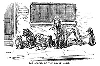 The Spread of the Queue Habit. (hungry dogs queue up in a line outside a shop with the sign Cats Meat Sold Here on the home front during WW1)