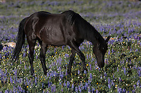 Hernando is a striking dark bay stallion, born in 2006 to Caveelitti.