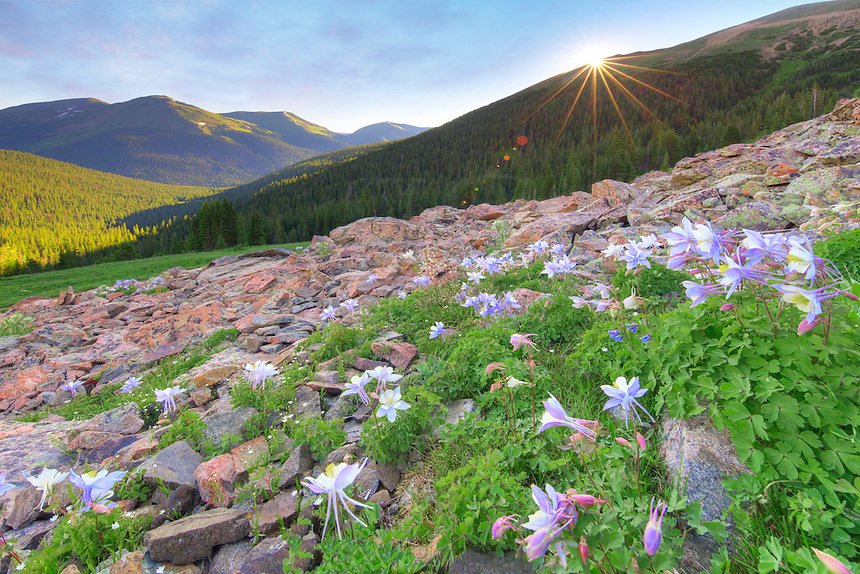 Near 11,500 feet, these beautiful Columbine - Colorado's state wildflower - waited for the morning sun to warm up the rocks and start the day. I, too, was ready for the sunlight. On this morning, the temperature was below 40 degree and rain had fallen the night before, leaving everything wet.