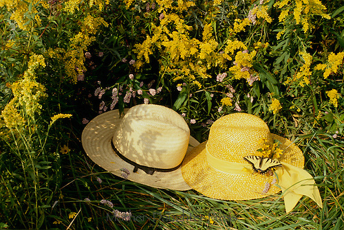 Romance-- Two hats, his and hers, lying in the grass in a field of wildflowers, with a swallowtail butterfly on the band