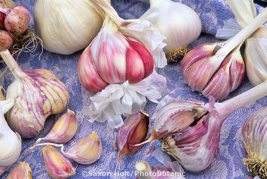 Garlic: (clockwise from top) California Late, Spanish Roja, Korean Red, Inchelium Red