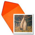 Boab or Australia Baobab<br />