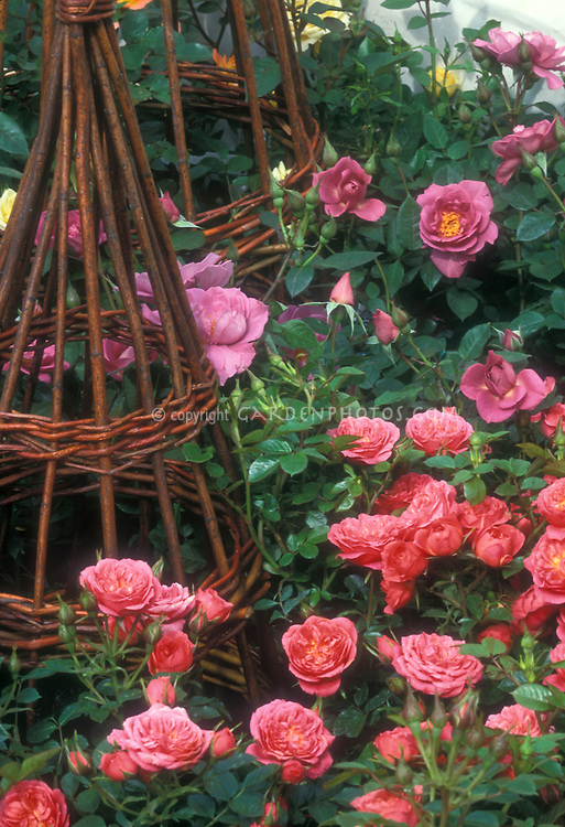 Rosa 'Pink Sweet Dreams' & 'Stardust' dwarf patio roses with willow trellis totem, in pink and lavender shades of color