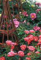 Rosa 'Pink Sweet Dreams' &amp; 'Stardust' dwarf patio roses with willow trellis totem, in pink and lavender shades of color