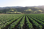 Salinas Valley crops