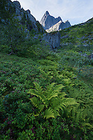 Fern grows in lush mountain valley with Trolltindan peaks rising in the distance, Trollfjord, Austvågøy, Lofoten Islands, Norway