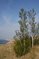 Stunted birches cling to the Grand Sable Dunes in Pictured Rocks National Lakeshore near Grand Marais Michigan.